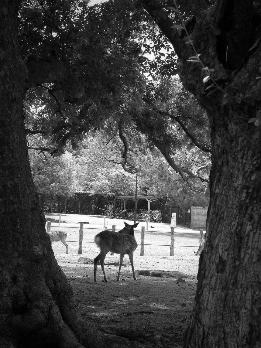bambi nara
