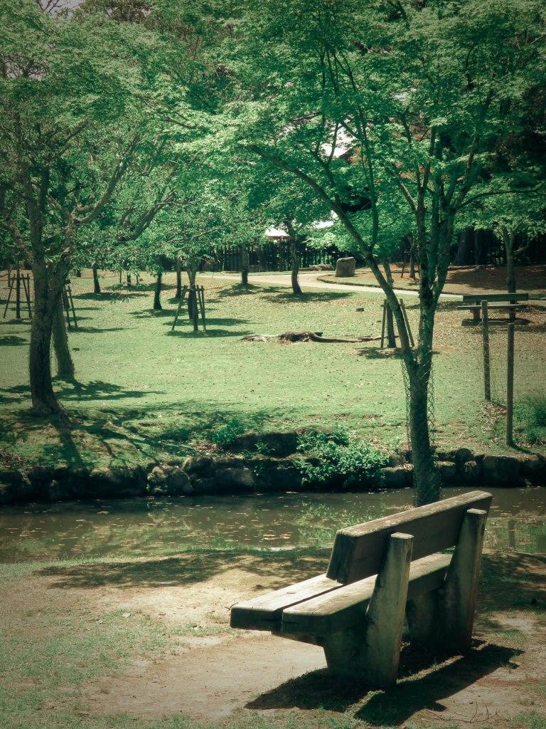 solitude rêveuse nara park