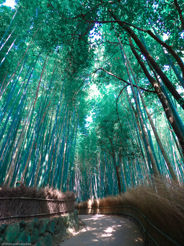 bambouseraie arashiyama 4