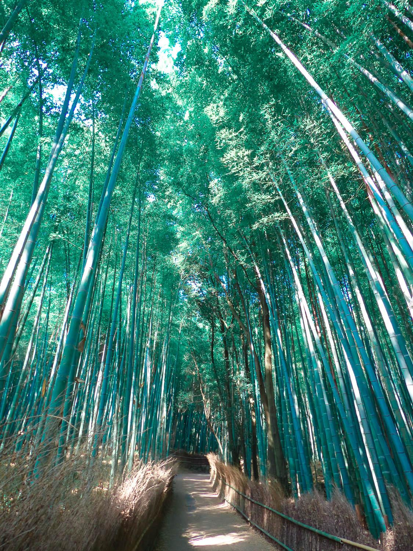 bambouseraie arashiyama3