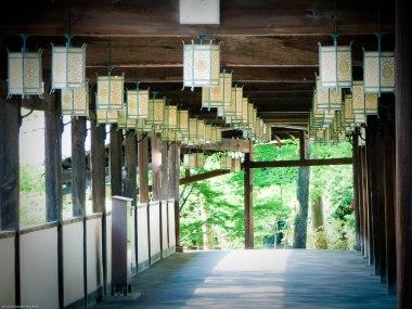temple kyoto safari