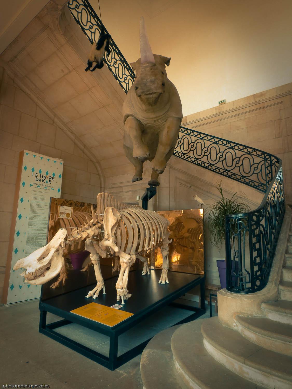 Exposition animalière musée d'histoire naturelle du Havre
