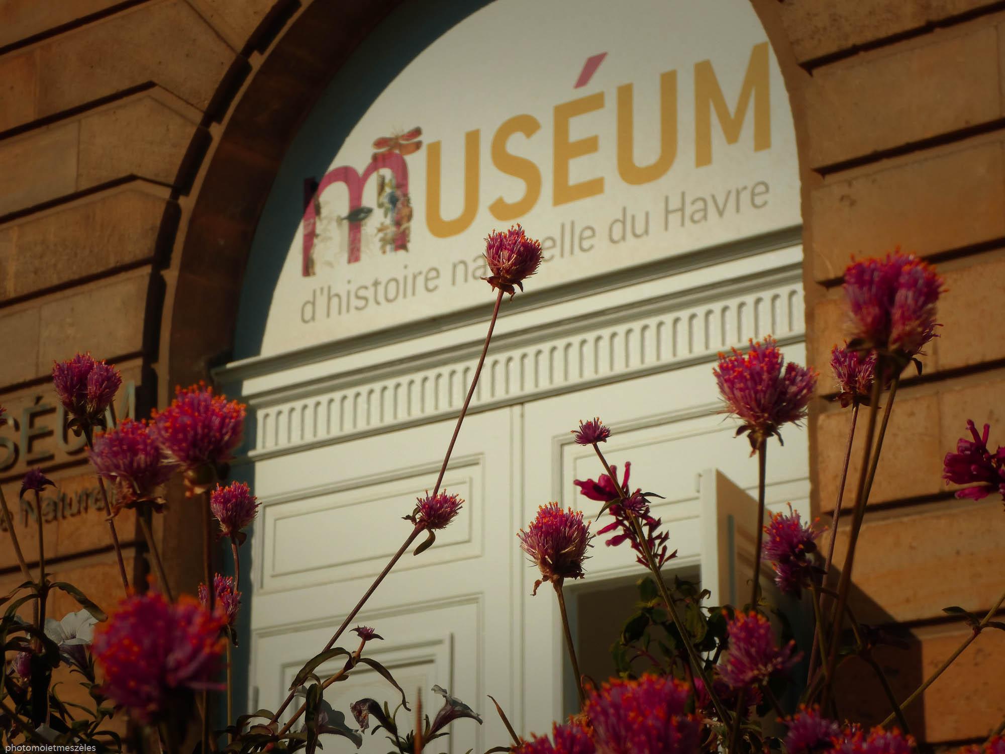 Le musée d'Histoire Naturelle de la ville du Havre