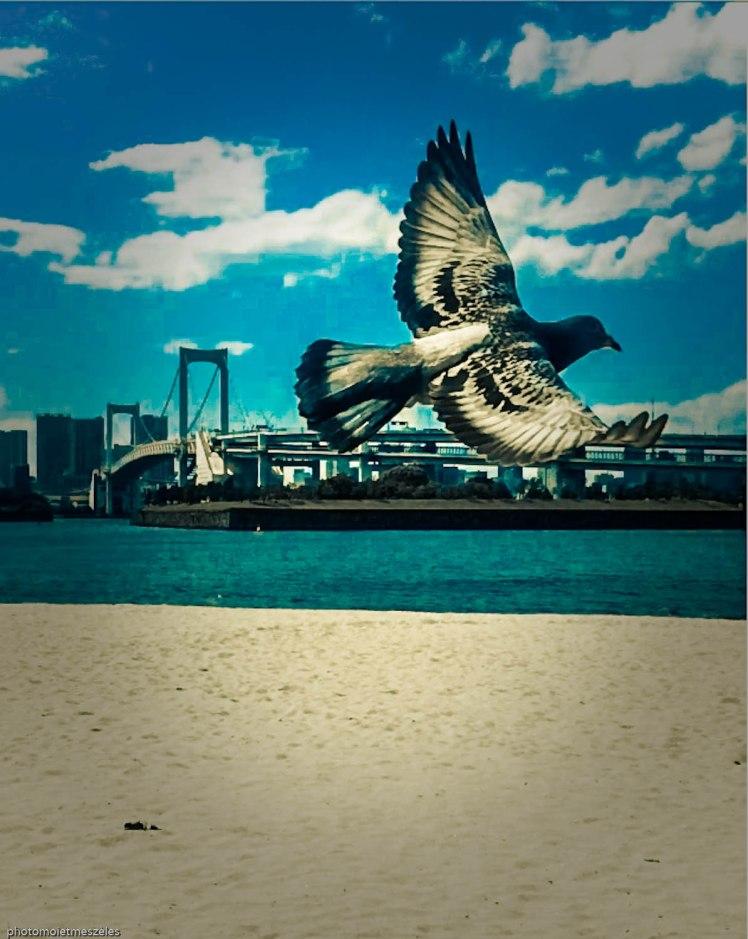 Pigeon et île d'odaiba