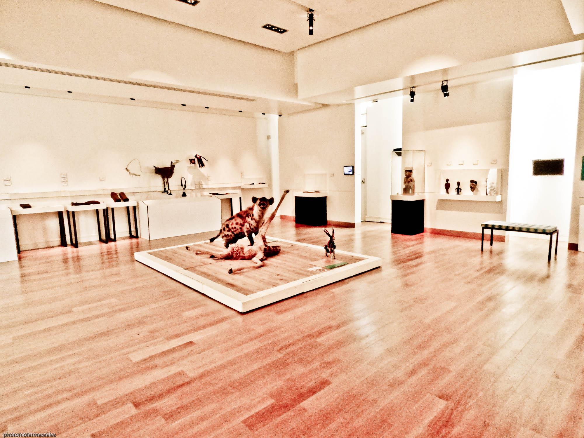 première salle d'exposition Le havre-Dakar musée d'histoire naturelle du Havre