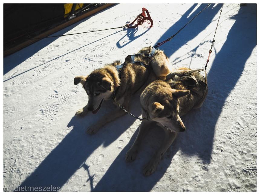 chien traineau lac terejl wind of mongolia mongolie hiver