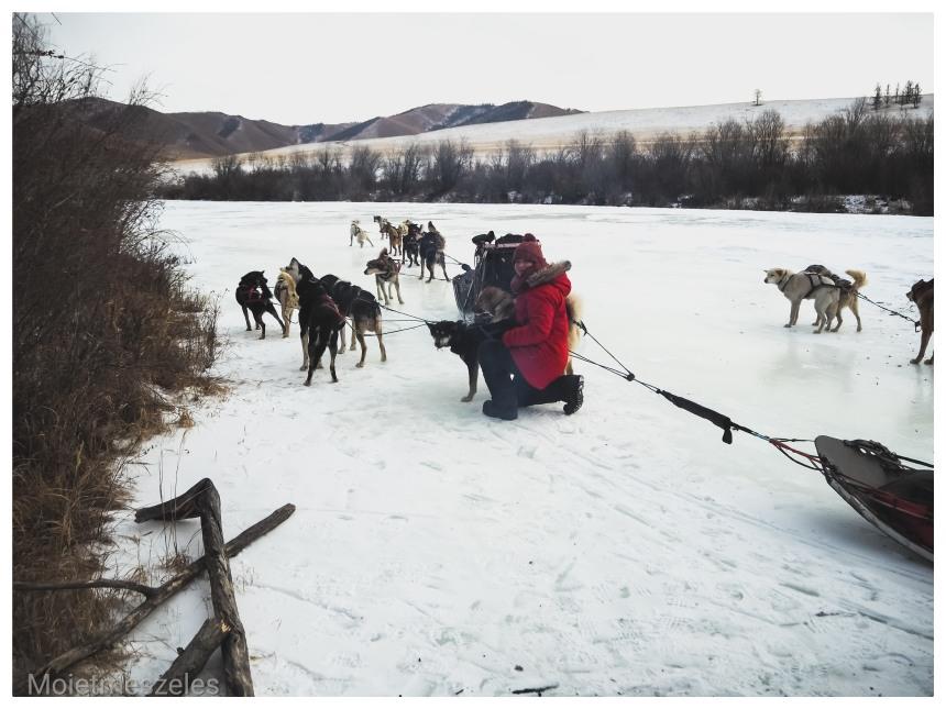 circuit chien traineau lac terejl wind of mongolia mongolie hiver (2)