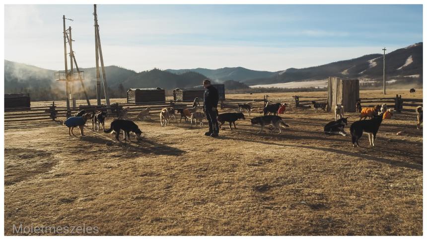 ferme circuit chien traineau lac terejl wind of mongolia mongolie hiver