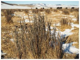 paysage arkhangai mongolie hiver