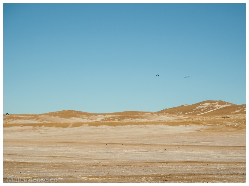 Mon inoubliable expérience au cœur de l'Hiver Mongol avec Wind OfMongolia
