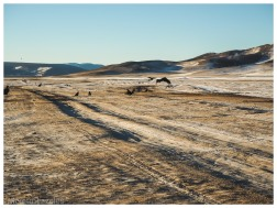vautours arkhangai mongolie hiver